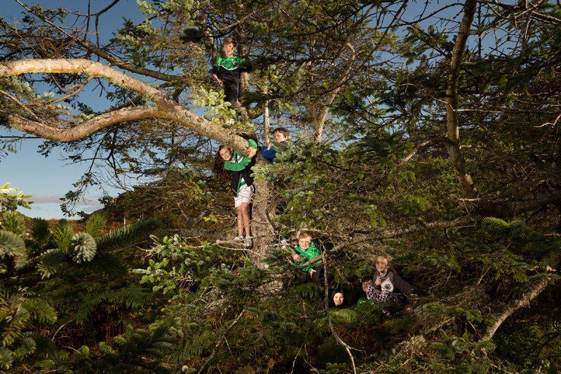 Netty's Tree